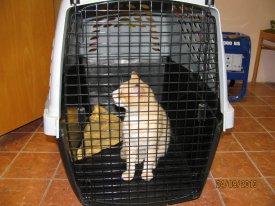 odchyt kočky